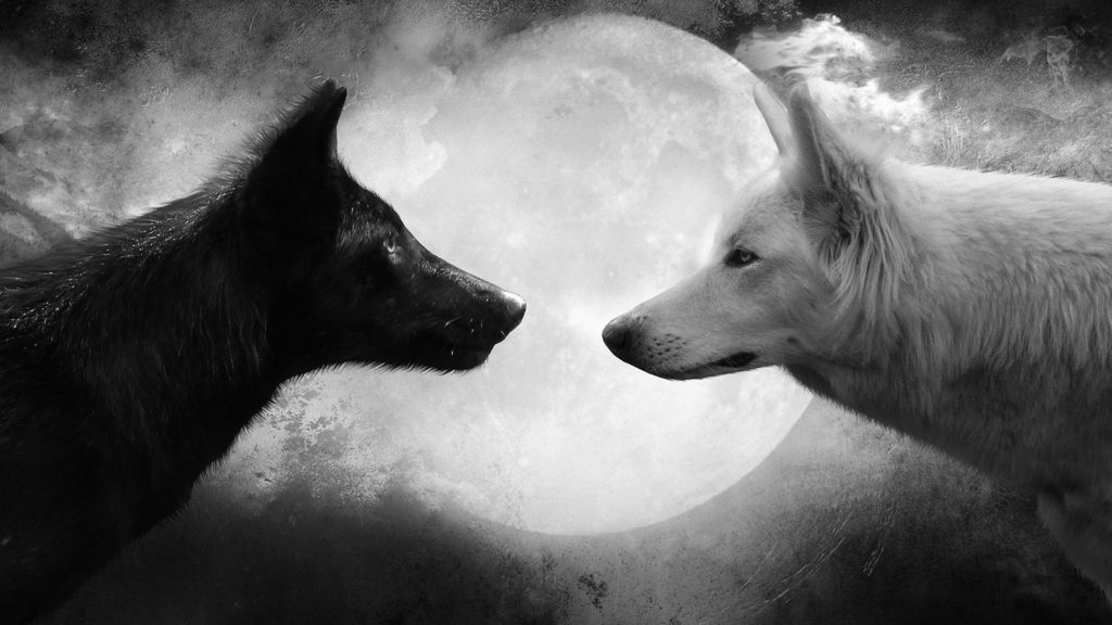 10 Most Popular Black And White Wolf Wallpaper FULL HD 1080p For PC Desktop 2018 free download 961 wolf hd wallpapers background images wallpaper abyss 1 1024x576