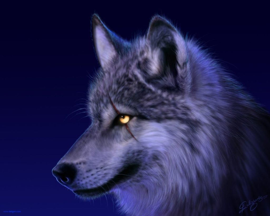 10 Top Cool Animal Wallpapers Wolf FULL HD 1920×1080 For PC Desktop 2018 free download 961 wolf hd wallpapers background images wallpaper abyss 1024x819