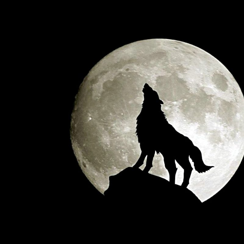 10 Top Black Wolf Hd Wallpaper FULL HD 1920×1080 For PC Background 2020 free download 966 wolf hd wallpapers background images wallpaper abyss 4 800x800