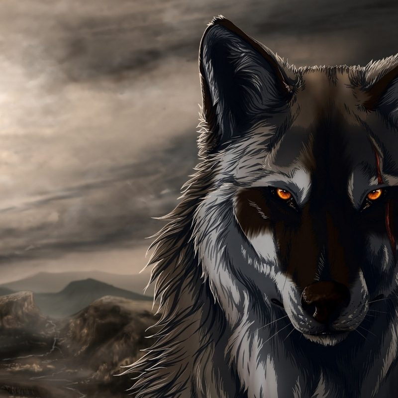 10 Best Cool Wolf Wallpaper Hd FULL HD 1920×1080 For PC Background 2018 free download 966 wolf hd wallpapers background images wallpaper abyss 800x800