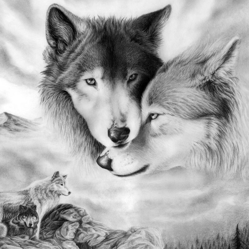 10 Top Free Wolf Wallpaper For Android FULL HD 1920×1080 For PC Background 2020 free download 966 wolf hd wallpapers background images wallpaper abyss page 2 800x800