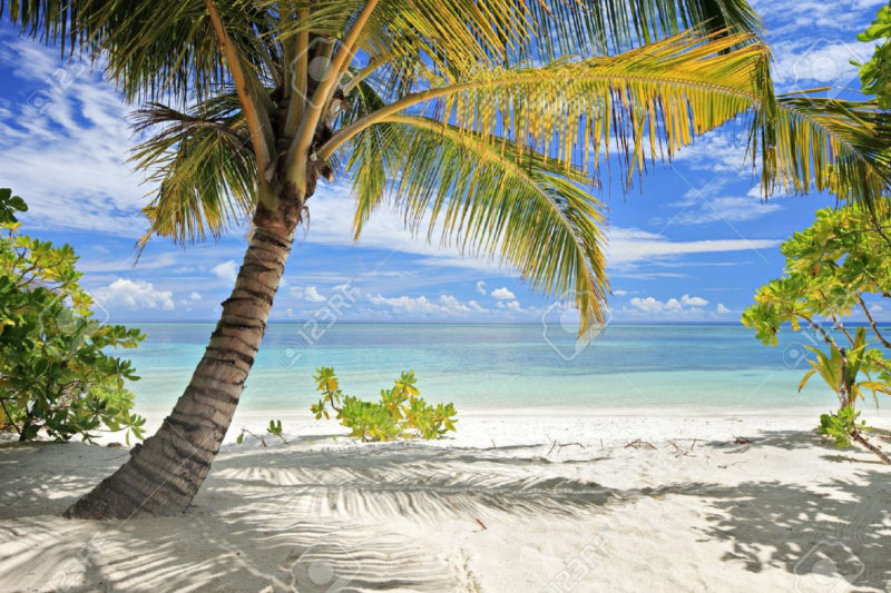 10 New Palm Tree And Beach Pictures FULL HD 1080p For PC Background 2018 free download a scene of palm trees and sandy beach in maldives island 800x533