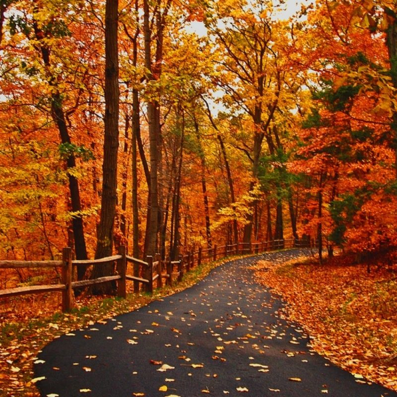 10 Top Hd Fall Landscape Pictures FULL HD 1080p For PC Desktop 2018 free download a whole lot of coffee and a little bit of crazy the long road left 800x800