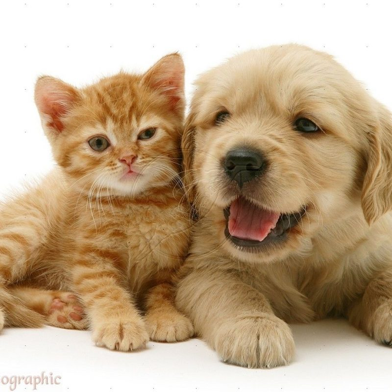 10 New Pics Of Puppys And Kittens FULL HD 1920×1080 For PC Desktop 2020 free download adorable cute baby kittens and puppies sleepingchild of artemis 1 800x800