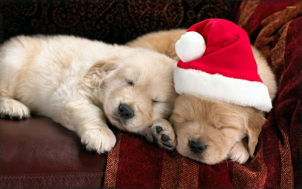 10 New Cute Puppy Christmas Pictures FULL HD 1920×1080 For PC Background 2020 free download adorable puppies sleeping on the couch on christmas eve wallpaper 1024x640