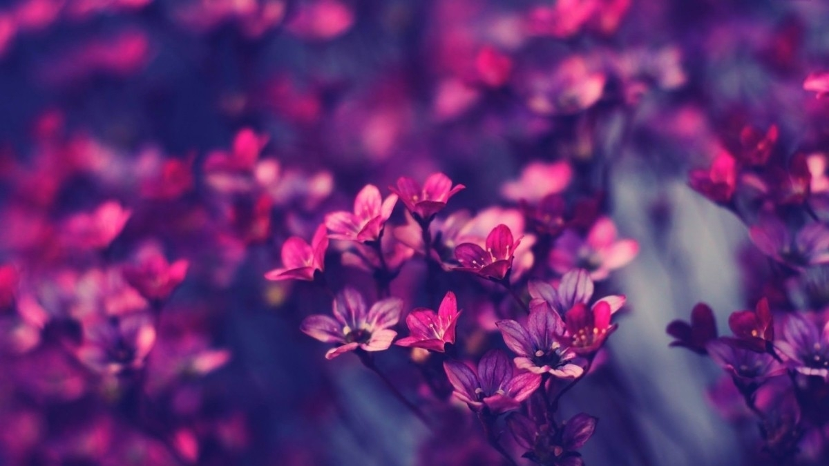 amazing hd desktop wallpapers 4k backgrounds 1920x1080p | pinofy