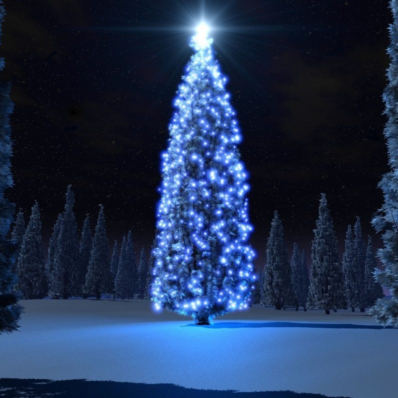 10 Top Free Christmas Trees Wallpaper FULL HD 1920×1080 For PC Background 2018 free download amazing wide hd wallpapers 3d christmas hd live wallpaper happy 800x800