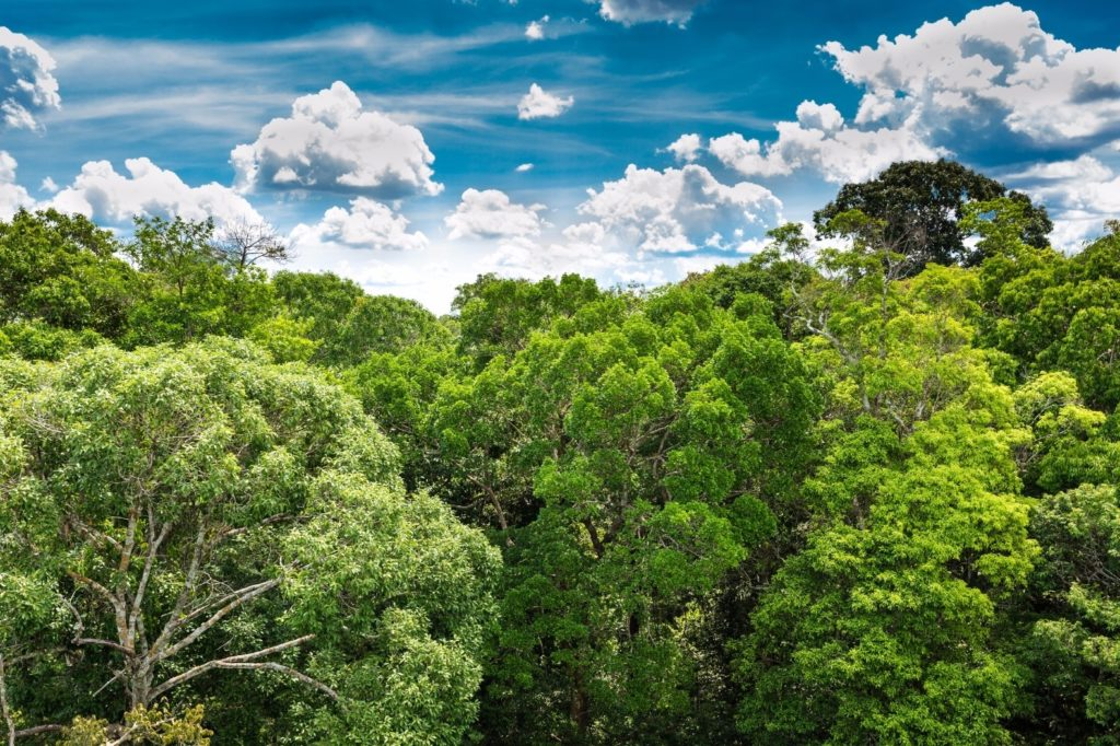 10 Most Popular Pictures Of The Amazon Rainforest FULL HD 1080p For PC Background 2018 free download amazon rainforest inhabitat green design innovation 1 1024x682