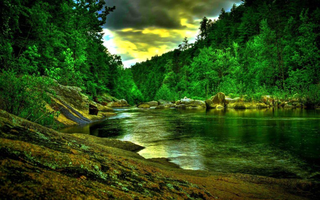 10 Latest Amazon Rainforest Wallpaper Hd FULL HD 1080p For PC Desktop 2020 free download amazon rainforest wallpapers wallpaper cave 2 1024x640