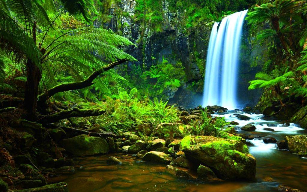 10 Latest Amazon Rainforest Wallpaper Hd FULL HD 1080p For PC Desktop 2020 free download amazon rainforest wallpapers wallpaper cave 3 1024x640