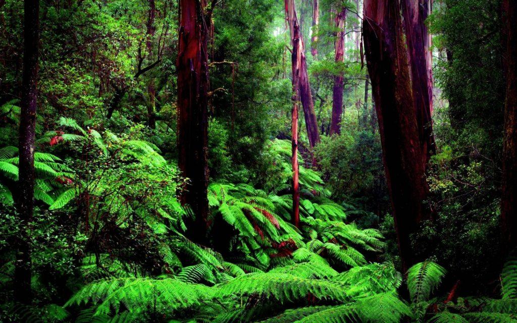10 Latest Amazon Rainforest Wallpaper Hd FULL HD 1080p For PC Desktop 2020 free download amazon rainforest wallpapers wallpaper cave 4 1024x640