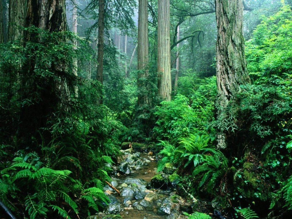 10 Latest Amazon Rainforest Wallpaper Hd FULL HD 1080p For PC Desktop 2020 free download amazon rainforest wallpapers wallpaper cave 6 1024x768