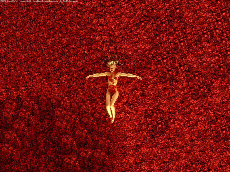 10 New American Beauty Wallpaper FULL HD 1920×1080 For PC Desktop 2018 free download american beauty wallpapers wallpaper cave 800x600