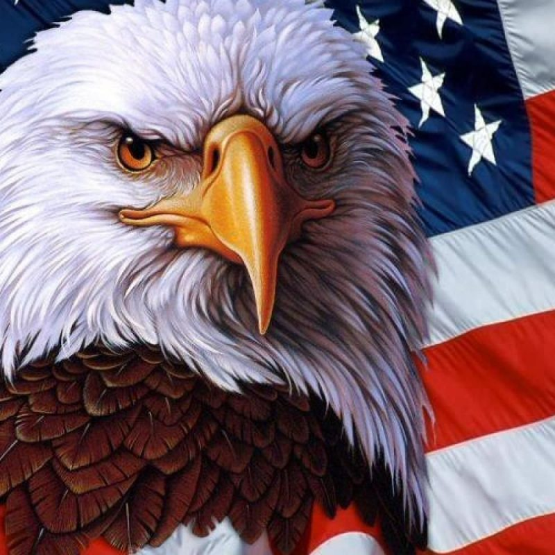 10 Top Eagle And Flag Wallpaper FULL HD 1080p For PC Desktop 2018 free download american flag wallpaper images 54dm easyoffer my america 800x800