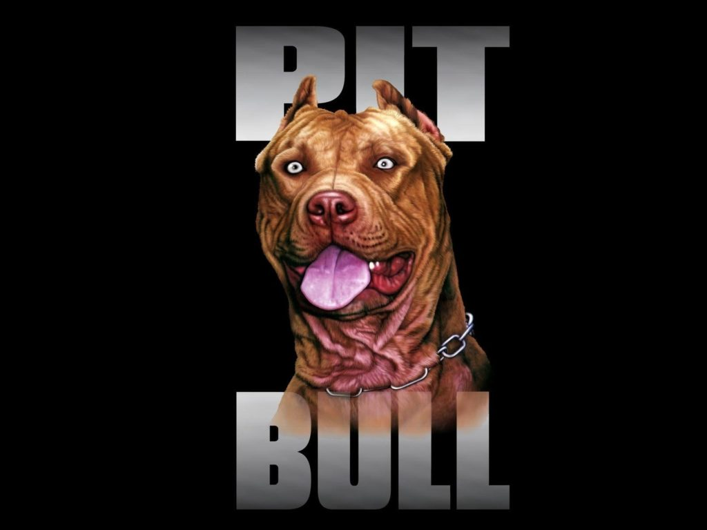 10 New American Pit Bull Wallpaper FULL HD 1920×1080 For PC Desktop 2018 free download american pit bull terrier dog wallpaper 1600x1200 519327 1024x768