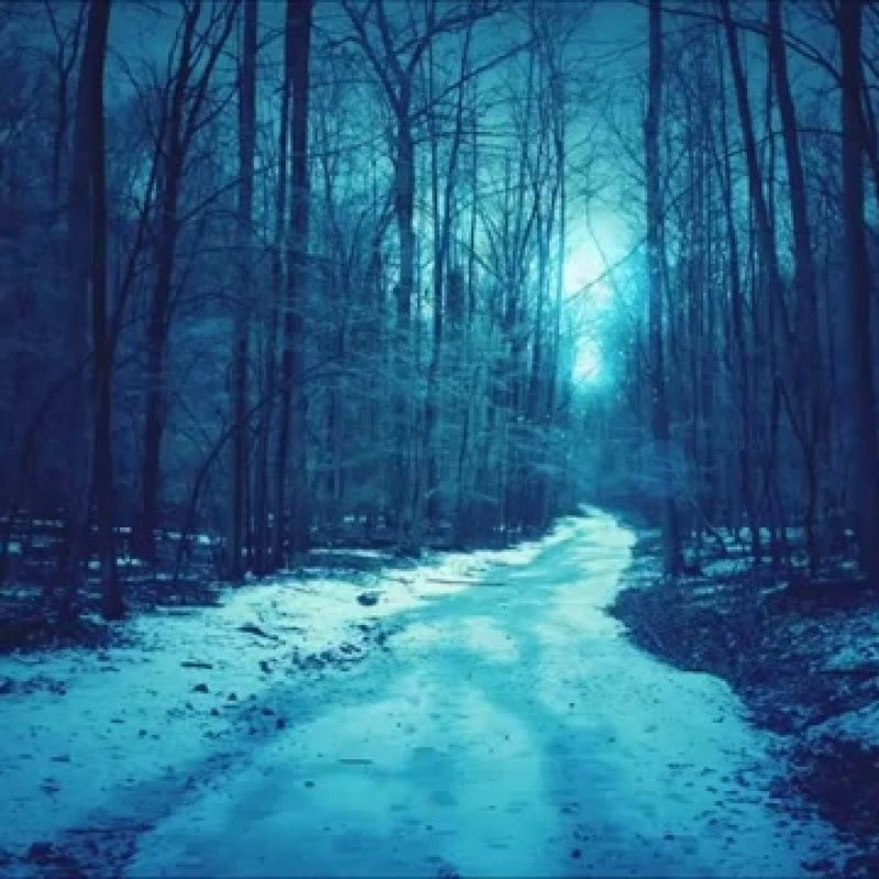 10 Top Dark Snowy Forest Background FULL HD 1920×1080 For PC Desktop 2020 free download anahata darkpsy forest psytrance winter mix 2015 youtube 800x800