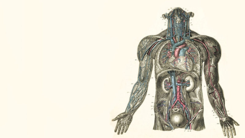 10 New Human Anatomy Wallpaper FULL HD 1920×1080 For PC Desktop 2020 free download anatomy computer wallpapers desktop backgrounds 1920x1080 id 800x450