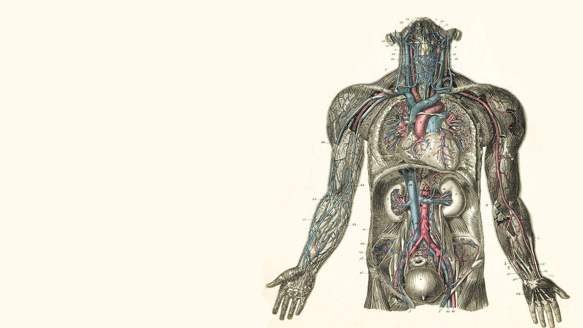 anatomy computer wallpapers, desktop backgrounds | 1920x1080 | id