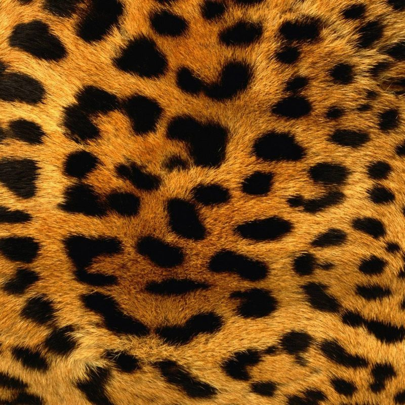 10 Top Leopard Print Wallpaper Hd FULL HD 1920×1080 For PC Background 2020 free download animal print desktop backgrounds wallpaper cave 800x800