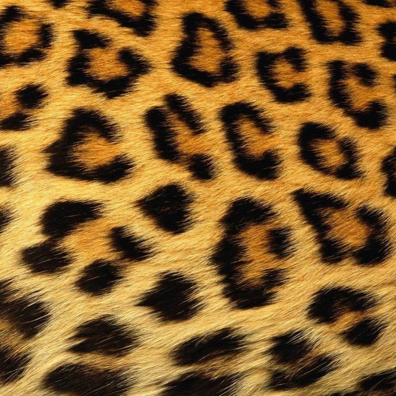 10 Top Leopard Print Wallpaper Hd FULL HD 1920×1080 For PC Background 2020 free download animal print wallpaper hd free download sharovarka pinterest 800x800