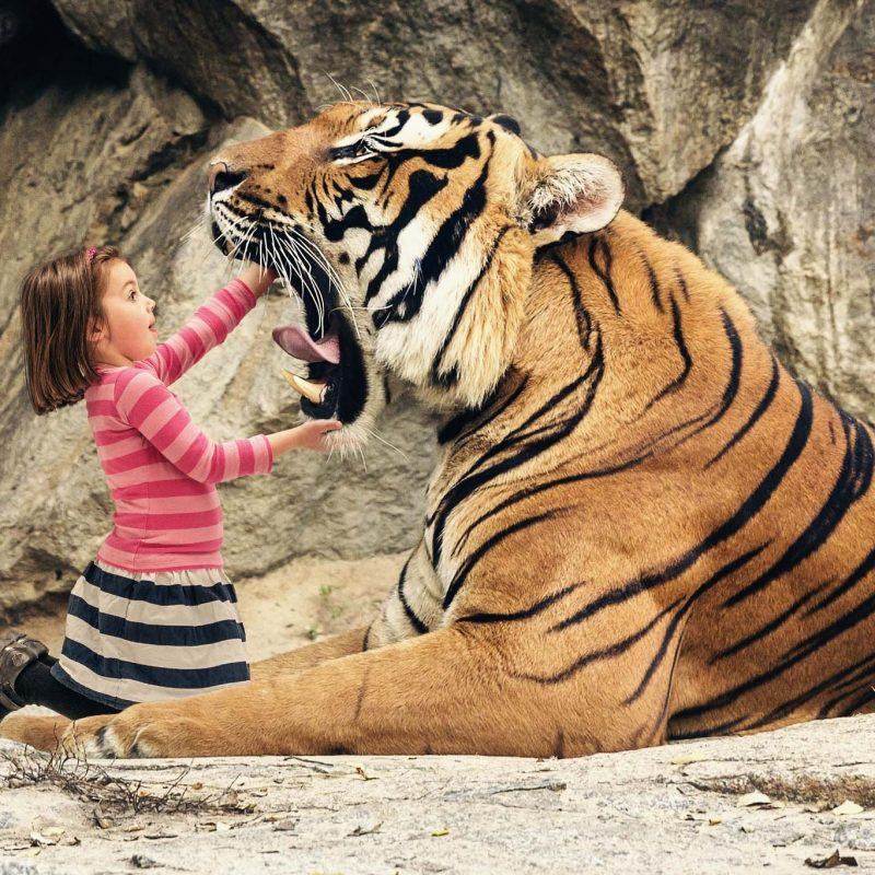 10 Latest Cool Pics Of Tigers FULL HD 1080p For PC Desktop 2020 free download animal tigers mouth tiger free cool wallpaper 2048x1365 cool pc 800x800
