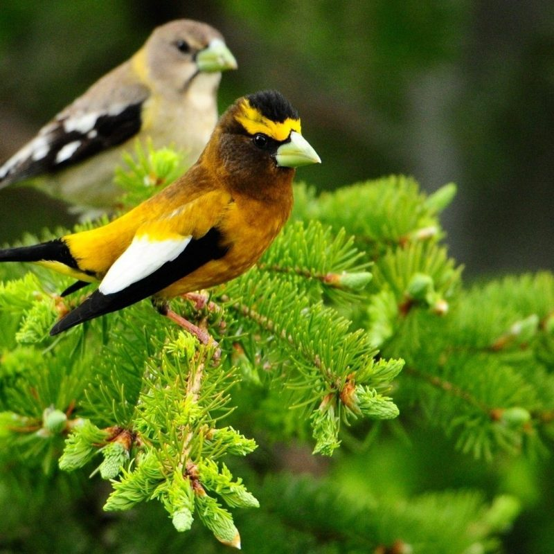 10 Most Popular Birds Full Hd Wallpapers FULL HD 1920×1080 For PC Desktop 2018 free download animals 1920x1080 full hd wallpapers 1080p wallpapers animals 800x800