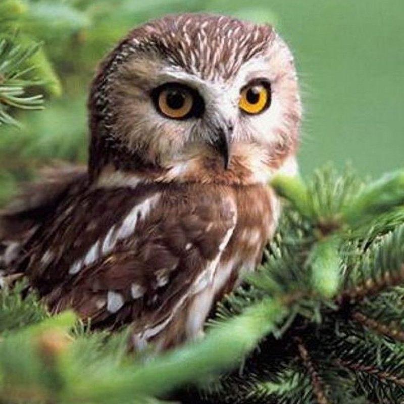 10 Top Owl Desktop Wallpaper Hd FULL HD 1920×1080 For PC Desktop 2018 free download animals 1920x1080 full hd wallpapers 1080p wallpapers owl 800x800