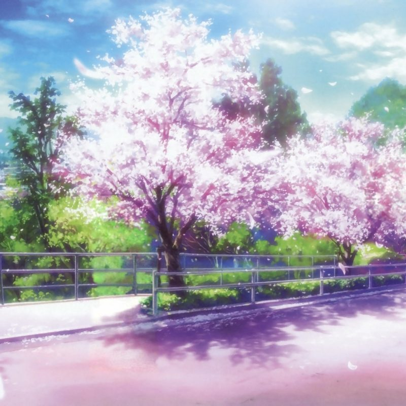 10 Most Popular Anime Cherry Blossom Wallpaper FULL HD 1080p For PC Background 2018 free download anime cherry blossom desktop wallpaper pixelstalk 800x800