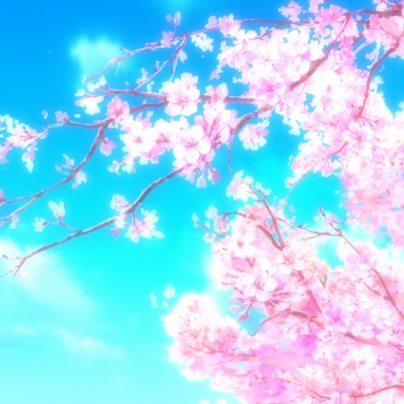 10 Most Popular Anime Cherry Blossom Wallpaper FULL HD 1080p For PC Background 2018 free download anime cherry blossom wallpaper 72 images 800x800