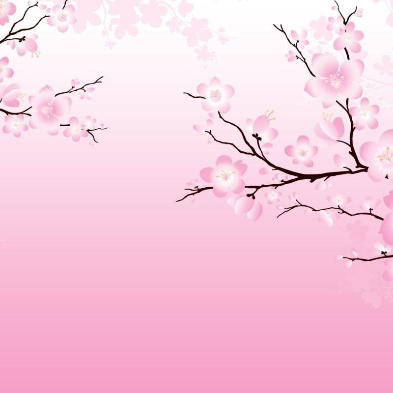 10 Most Popular Anime Cherry Blossom Wallpaper FULL HD 1080p For PC Background 2018 free download anime cherry blossom wallpaper 800x800