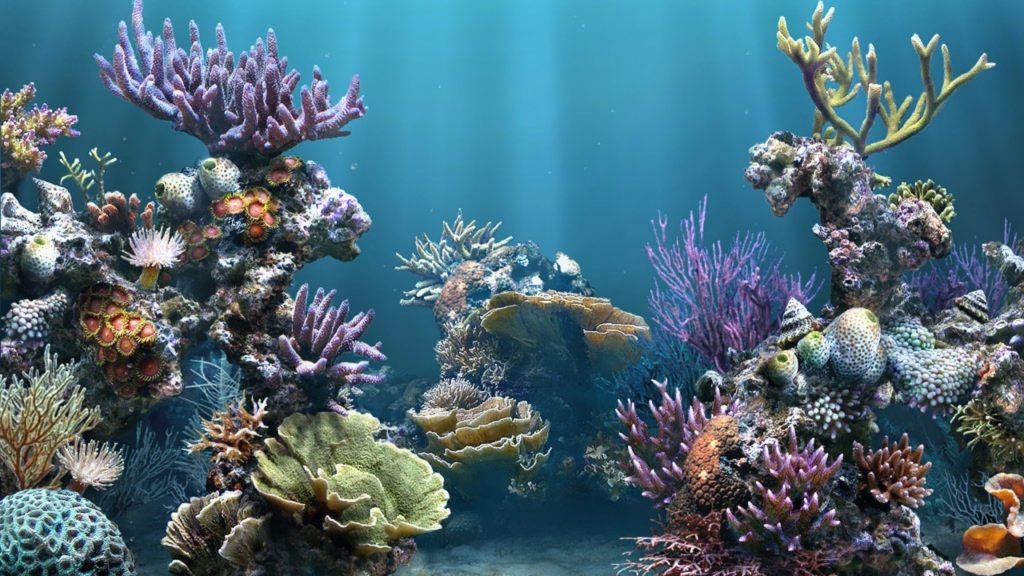 10 Most Popular Pictures Of Aquarium Backgrounds FULL HD 1080p For PC Desktop 2018 free download aquarium backgrounds pictures wallpaper 1920x1080 aquarium 1024x576