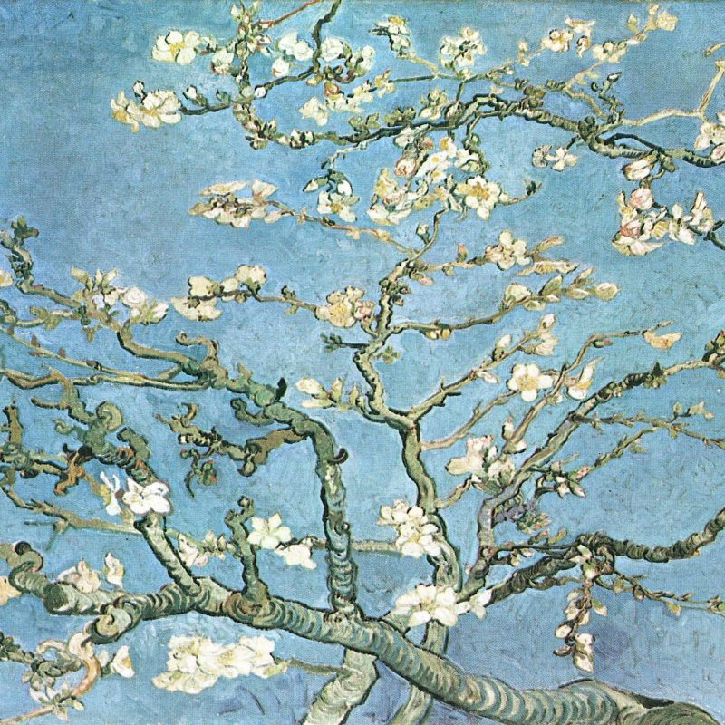 10 New Van Gogh Almond Blossoms Wallpaper FULL HD 1920×1080 For PC Background 2018 free download art blossoming almond tree branches vincent van gogh wallpaper 800x800