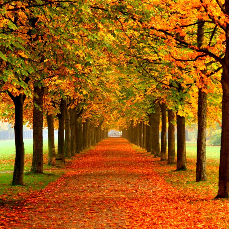 10 Most Popular Free Desktop Wallpaper For Fall FULL HD 1920×1080 For PC Desktop 2020 free download autumn colors wallpaper group with 54 items 800x800