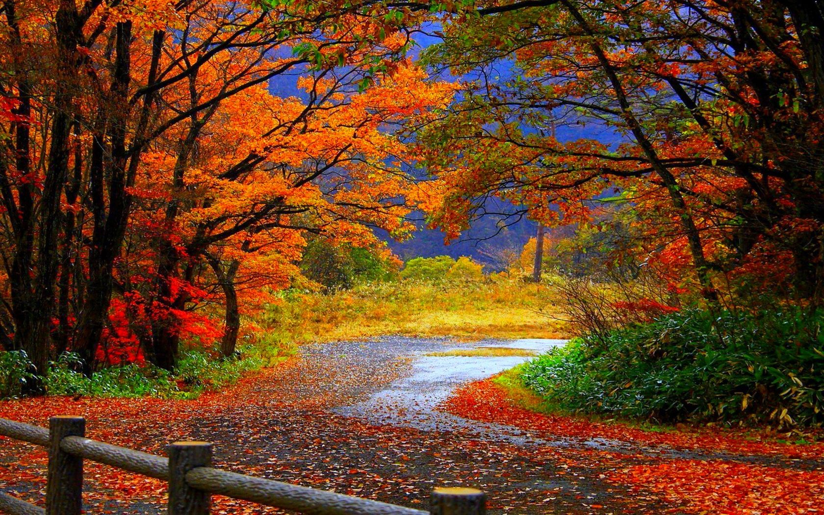 autumn fall scenery wallpaper | nature desktop wallpapers | autumn