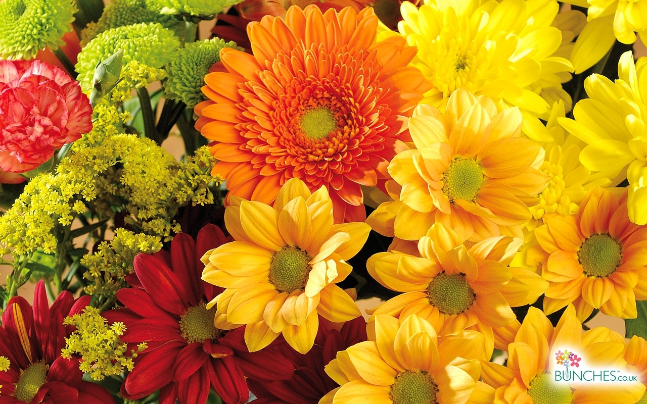 autumn flowers | the magical nature of flowers | pinterest