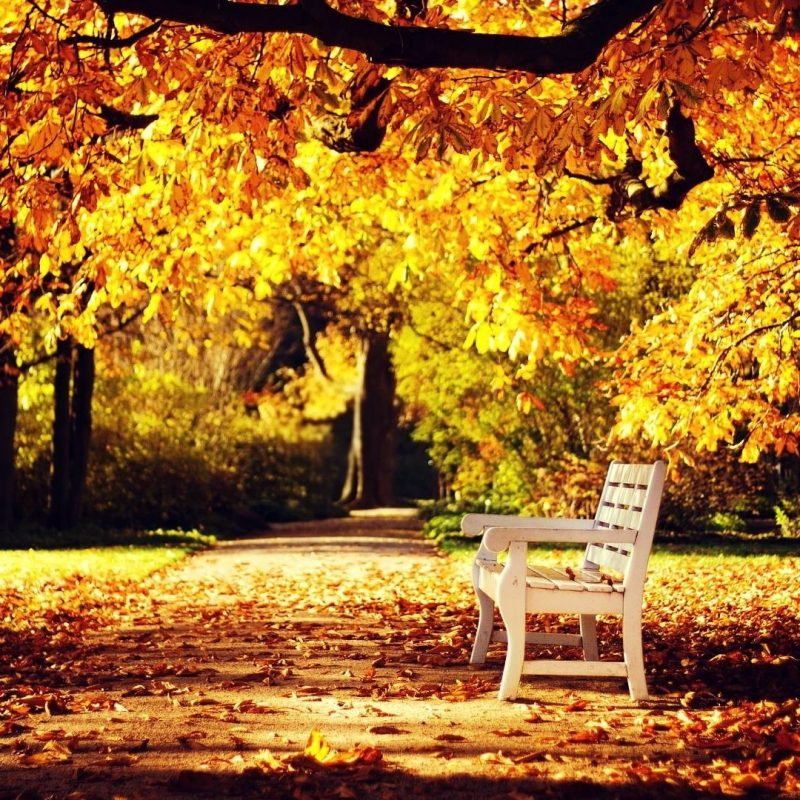 10 Most Popular Autumn Hd Wallpapers 1080P FULL HD 1080p For PC Desktop 2020 free download autumn hd wallpapers 1080p 76 images 800x800
