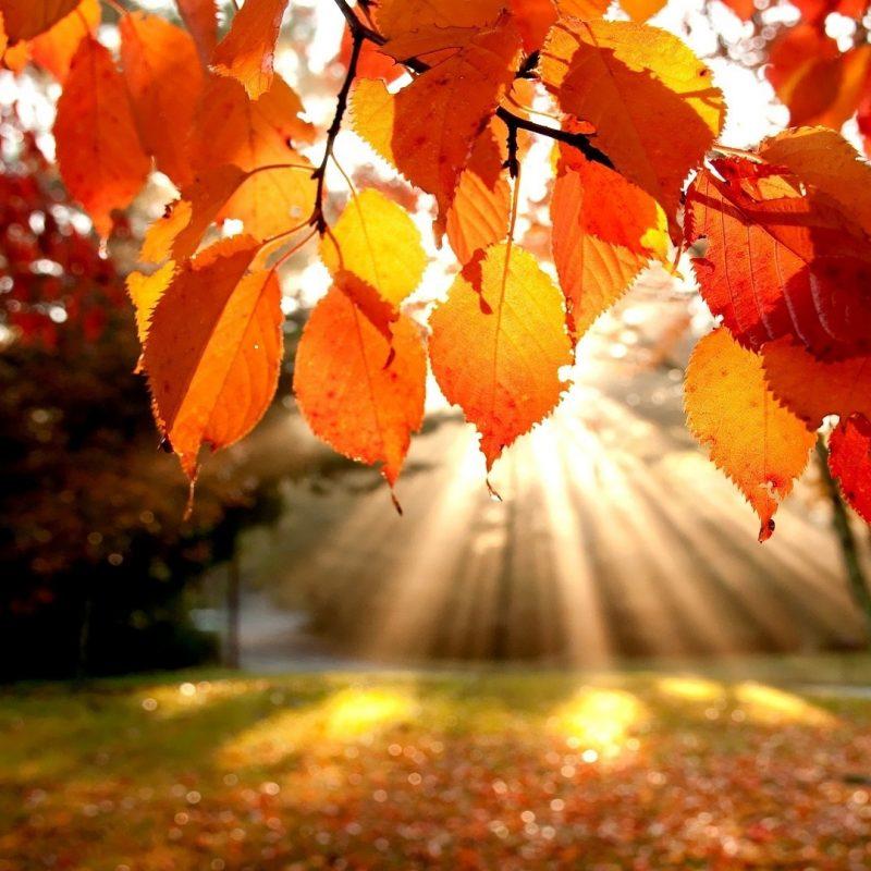 10 New Autumn Landscape Wallpaper Hd FULL HD 1080p For PC Background 2018 free download autumn landscape e29da4 4k hd desktop wallpaper for 4k ultra hd tv 800x800