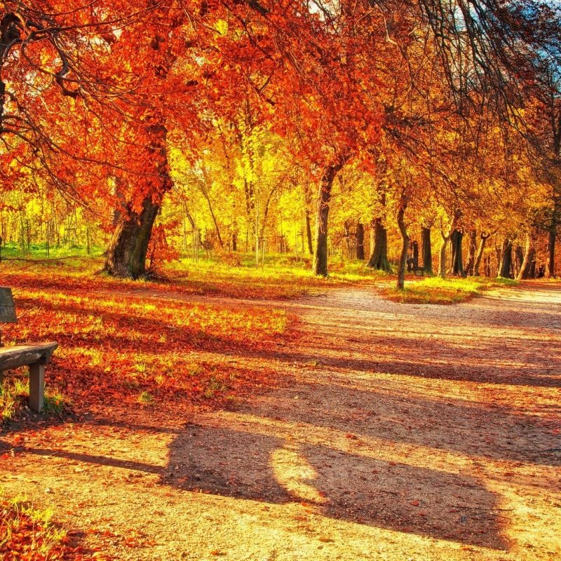 10 Top Fall Leaves Wallpaper Desktop FULL HD 1920×1080 For PC Background 2020 free download autumn leaves desktop background wallpaper high resolution 800x800