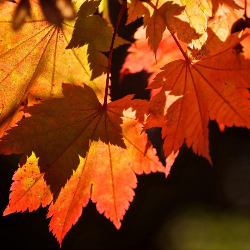 10 Top Fall Leaves Wallpaper Desktop FULL HD 1920×1080 For PC Background 2020 free download autumn leaves e29da4 4k hd desktop wallpaper for 4k ultra hd tv e280a2 tablet 1 800x800