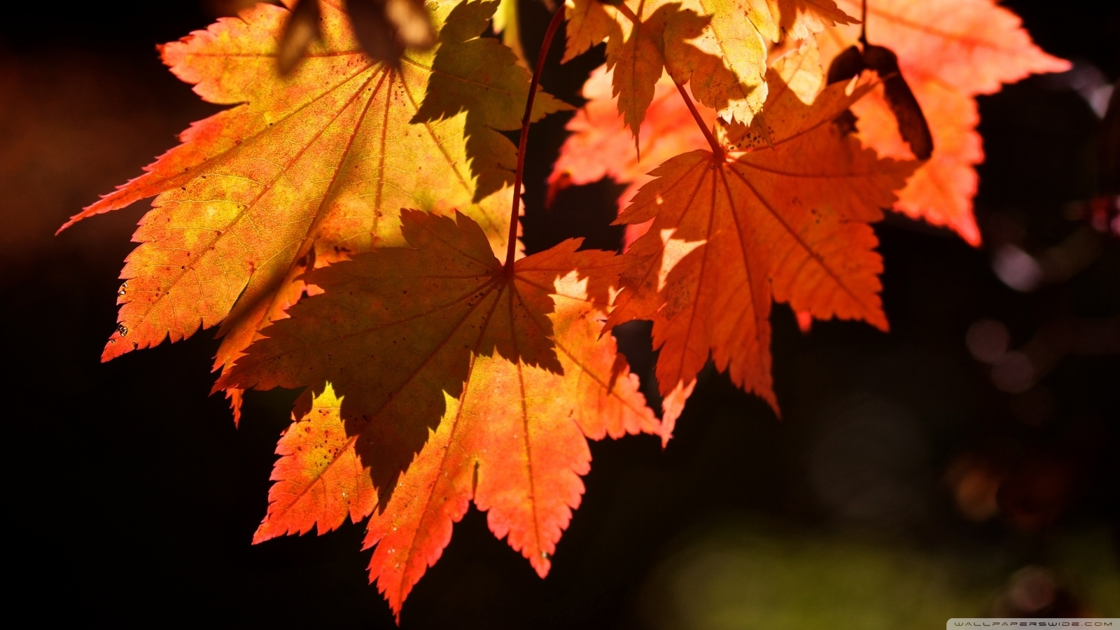 autumn leaves ❤ 4k hd desktop wallpaper for 4k ultra hd tv • tablet