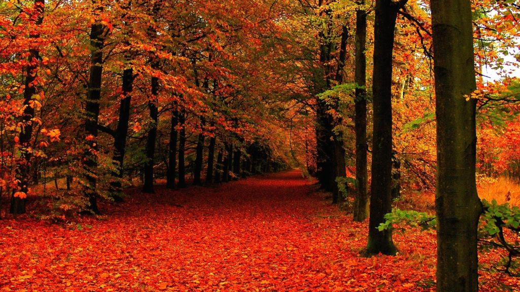 10 Best High Definition Autumn Wallpaper FULL HD 1080p For PC Background 2020 free download autumn mountain pics 08241 baltana 1024x576
