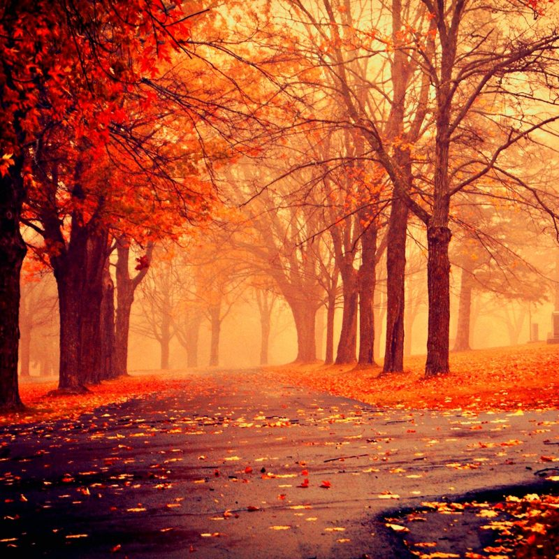 10 Best Beautiful Fall Pictures Wallpaper FULL HD 1080p For PC Desktop 2020 free download autumn nature wallpapers hd pictures one hd wallpaper pictures 3 800x800
