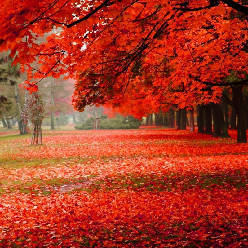 10 New Beautiful Autumn Wallpapers Desktop FULL HD 1920×1080 For PC Background 2018 free download autumn nature wallpapers hd pictures one hd wallpaper pictures 4 800x800
