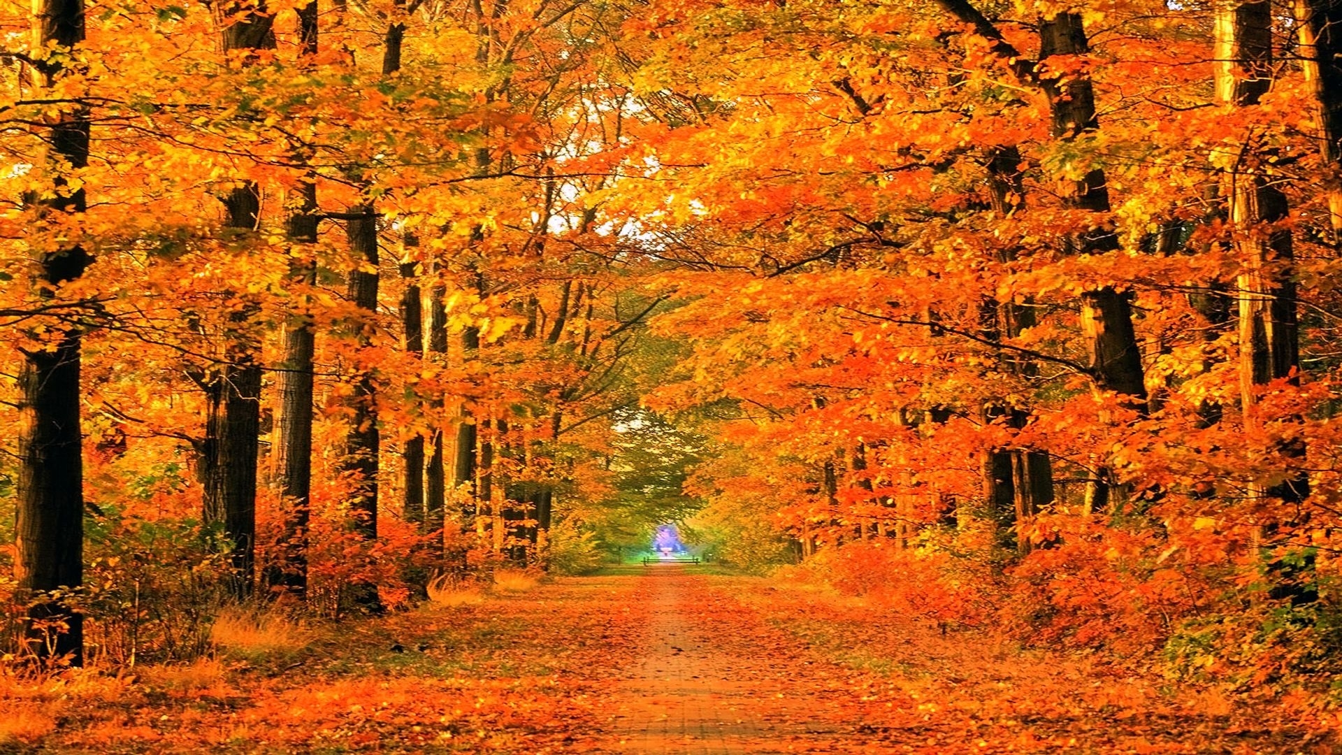 autumn path | soapin'spiration! | pinterest | fall desktop