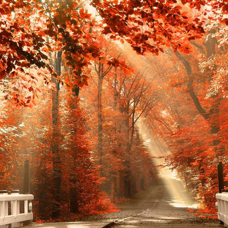 10 Latest Fall Desktop Background Pictures Full Hd 1920 1080 For Pc