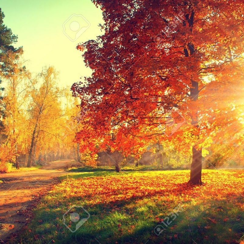 10 Most Popular Photos Of Fall Trees FULL HD 1920×1080 For PC Background 2018 free download autumn scene fall trees and leaves in sun light stock photo 800x800