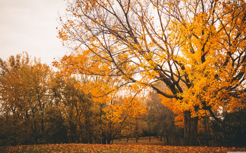 10 New Autumn Scenes Wallpaper FULL HD 1080p For PC Background 2018 free download autumn scenery e29da4 4k hd desktop wallpaper for 4k ultra hd tv e280a2 wide 800x500