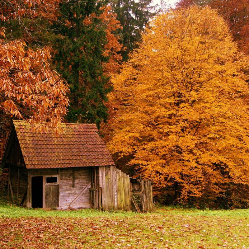 10 Most Popular Fall Scenes Desktop Backgrounds FULL HD 1920×1080 For PC Background 2018 free download autumn scenes desktop wallpaper 1 800x800