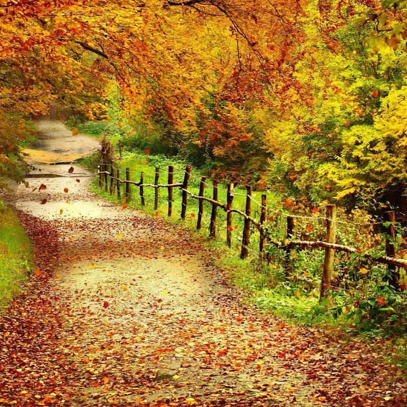 10 Most Popular Fall Scenes Desktop Backgrounds FULL HD 1920×1080 For PC Background 2018 free download autumn scenes desktop wallpaper 2 800x800