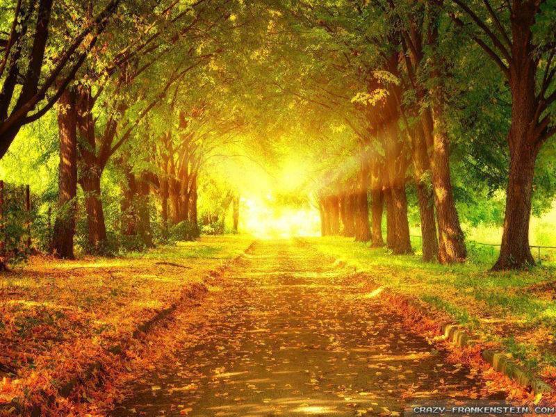 10 New Autumn Scenes Wallpaper FULL HD 1080p For PC Background 2018 free download autumn scenes wallpapers wallpaper cave 800x600
